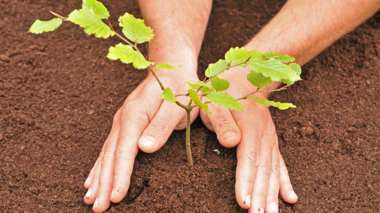 саженцы деревьев выращивание