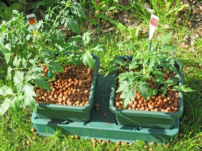 Керамзит в садоводстве: свойства, выбор, применение