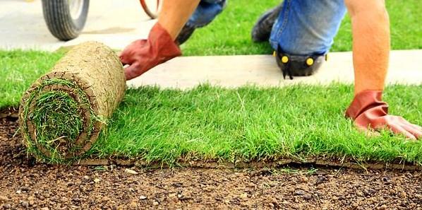 Рулонный газон преимущества и недостатки