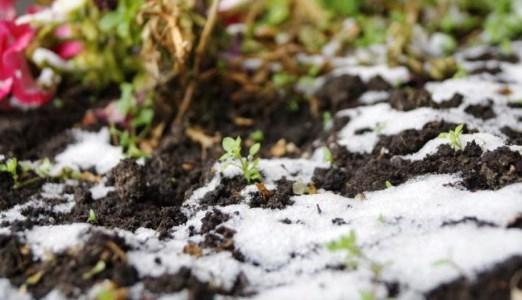 посадка овощей под зиму