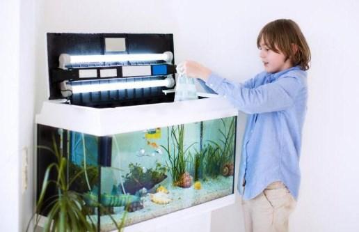 аквариум уход