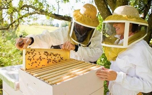 Пчелиный стартап умный улей
