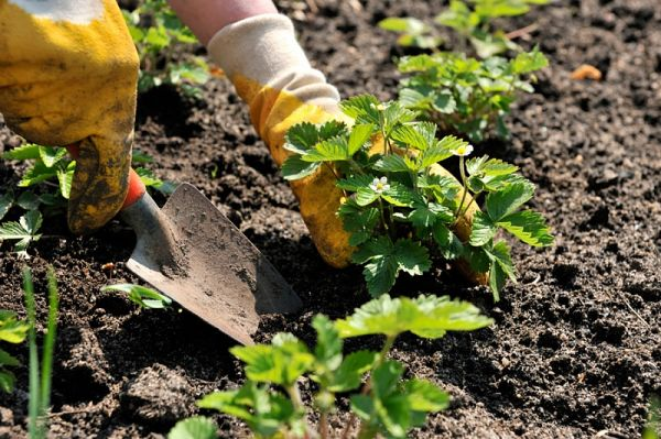 Как ухаживать и уберечь руки при работе в саду