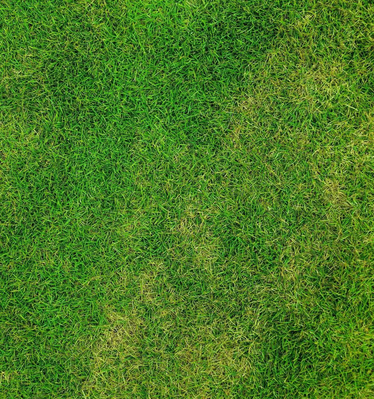 Пожелтевшие травинки. ФОто