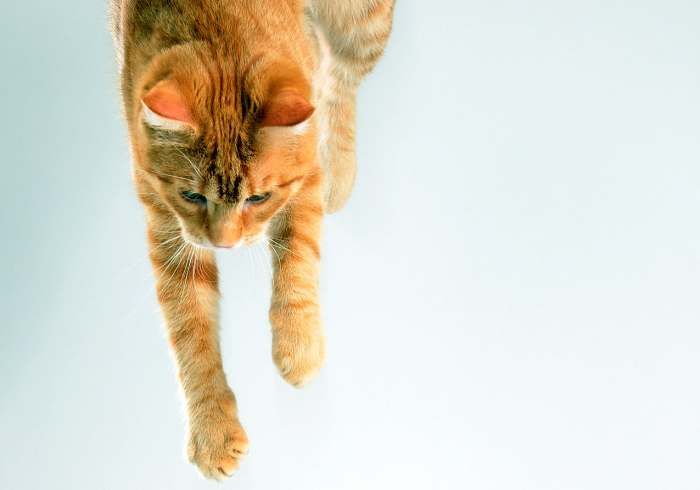 кошка упала с 10 этажа
